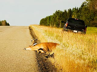 deer-hit-inform-police