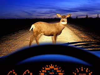 deer-car-attention