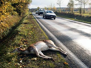 deer-hit-onroad