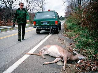 deer-hit-call-police