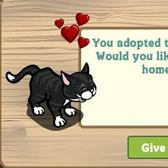 Sad, Lonely Black Cats Wander into FarmVille, Then Disappear