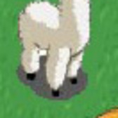 FarmVille Llama vs. Alpaca: There's a difference