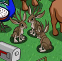 FarmVille Freak Mohamed's Jackalopes
