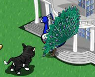 FarmVille Freak ArtisitcPhotosMI's Peacock Back