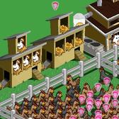 Zynga fixes Chicken coop glitch in FarmVille