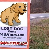 FarmVille Dogs: 'Don't worry ... you will see them soon'