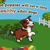 FarmVille puppy: First look at the Border Collie pup all growed up