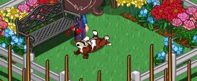 farmville puppy kibble -- after feeding your puppy you're rewarded with a cute dance