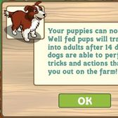 FarmVille puppies turn into full-grown dogs -- finally!