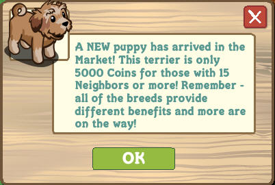 farmville terrier puppy available in the market