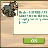 FarmVille Heeler dog: Everything you need to know