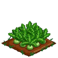 farmville daikon crop