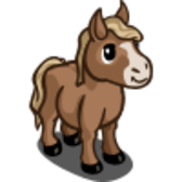 FarmVille unreleased animal: The Miniature Horse