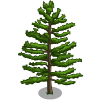 farmville white pine tree