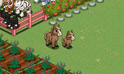 farmville miniature horse