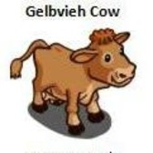 FarmVille German Animals and Buildings: Gelbvieh Cow, Mountain Tavern and more
