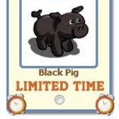 FarmVille Black Pig now giftable
