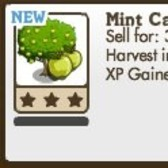 FarmVille: Mint Candy Tree now available, but there's a catch