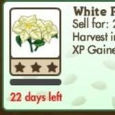 New FarmVille Limited Edition Crop: White Poinsettia (requires seed packets)