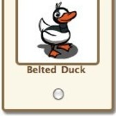 FarmVille: Belted Duck available as a free gift / adoptable animal