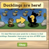 FarmVille Ducklings: Everything you need to know