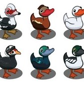 FarmVille Sneak Peek: Six new Duck types apparently coming soon