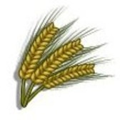 FarmVille Sneak Peek: Barley crop coming soon