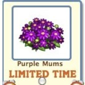 FarmVille: Purple Mums available as free gift for a limited time