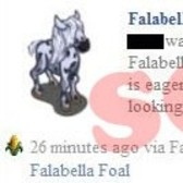 FarmVille Scam Alert: Beware Falabella Foal News Feed Posts