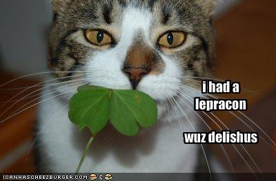 st patricks day shamrock cat