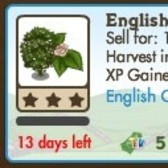 FarmVille LE English Countryside Trees: English Elm & Wych Elm Tree