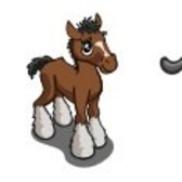 FarmVille Sneak Peek: Shire Horse, Shire Foal, Short Hair Cat, & Brown Dutch Rabbit