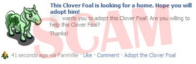 Clover Foal Scam