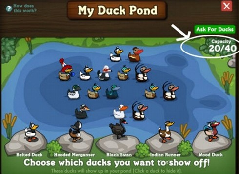 Duck Pond Expansion
