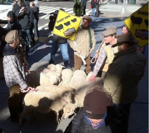 Zynga Sheep in NYC