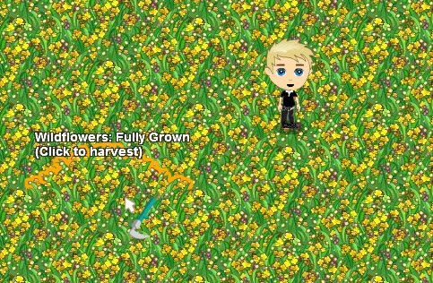 FarmVille Wildflowers