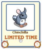 Chinchilla Free Gift