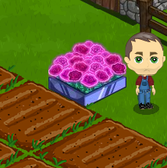 FarmVille GagaVille: Grab the Electric Rose Bed from 102.7 KIIS FM