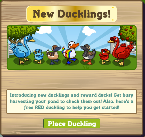 New Ducklings!
