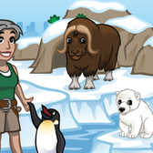 CityVille Zoo Arctic Habitat: Everything you need to know