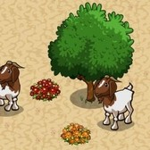 FarmVille: Boer Goat available as free gift for a limited time