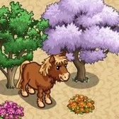 FarmVille: Randomly appearing Dartmoor Ponies leave players confused