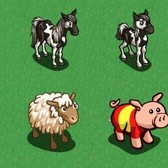 FarmVille Spain Animals: Pottok Pony, Latxa Sheep and Spain Flag Pig
