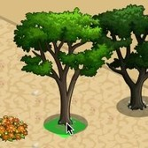FarmVille Vineyard Trees: Cypress Tree and Monterey Cypress Tree
