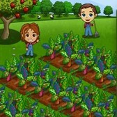 FarmVille: Rainbow Chard charity crop now available