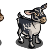 FarmVille Vineyard Animals: Maremmano Horse and Alpine Dairy Goat
