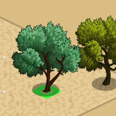 FarmVille Vineyard Trees: Lucques Olive and Picholine Olive Tree