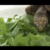 Bravo gifts turtle with instant cable TV fame and a Facebook game