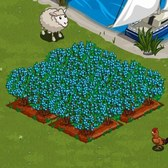 FarmVille Lighthouse Cove Sneak Peek: Chandler Blueberry crops in the wild