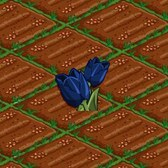 FarmVille: Plant Black Tulips for Halloween